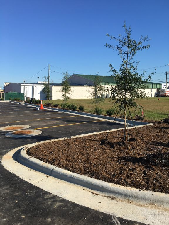 Landscaping complete (7)